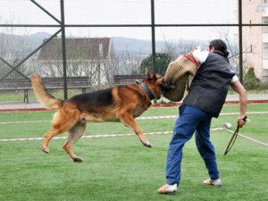 alan-koruma-egitimi-bodyguard