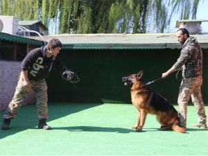 bodyguard-alankoruma-kopek-egitim-2
